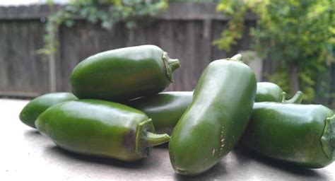 mild jalapeno pepper  plants kaw valley greenhouses