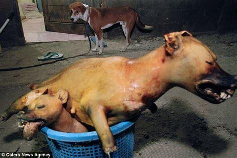 shocking     indonesian dog meat factory