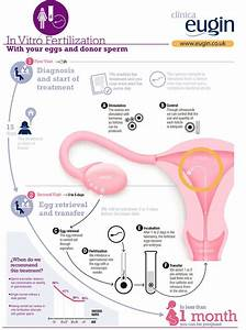 IVF infographic p Pinned by BabyBump, the app for ...