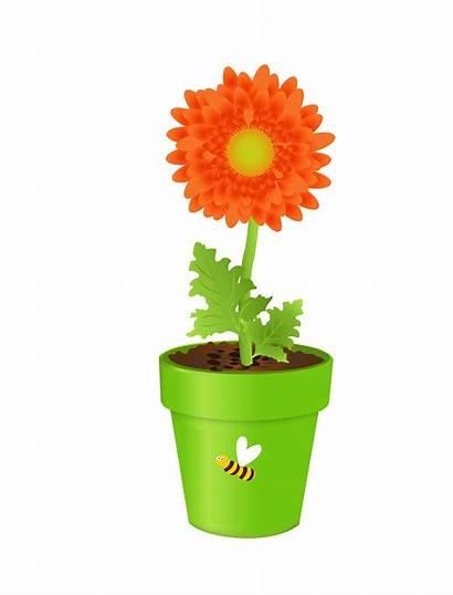 Vase Flower Clipart Clip Plant Yellow Transparent