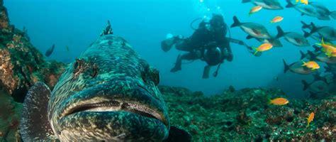 south africa underwater photography  video internship