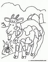 Coloring Goat Billy Popular Template sketch template