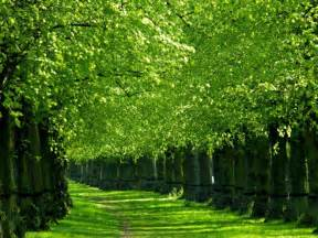 20 most beautiful trees around the world for your inspiration