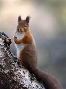 Happy Squirrel Face