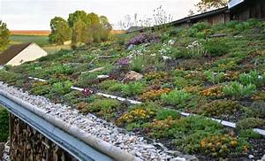 Extensive Dachbegrünung Pflanzen : dachgarten24 pflanzen f r ihr gr nes dach ~ Frokenaadalensverden.com Haus und Dekorationen