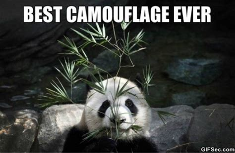 Camo Memes - camouflage viral viral videos