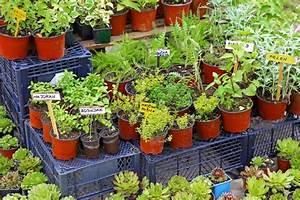 Kräuter Im Garten : kr uter im topf tipps f r das pflanzen und pflegen ~ Frokenaadalensverden.com Haus und Dekorationen