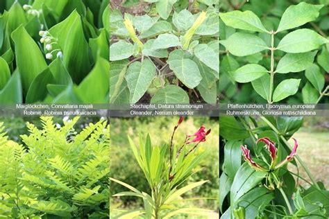 Pilze Im Garten Giftig Für Hunde by Giftige Pflanzen Bilder Giftige Pflanzen Fur Pferde Mit