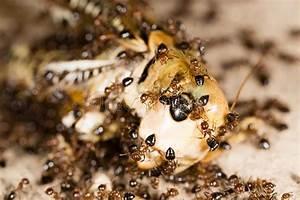 Was Essen Ameisen :  ~ Lizthompson.info Haus und Dekorationen