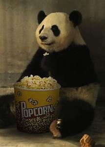 Panda Eating Popcorn GIF - Popcorn Panda Eating - Discover ...
