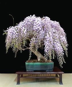 Bonsai Pflege Für Anfänger : interview mit 7 bonsai experten ber 30 tipps f r anf nger ~ Frokenaadalensverden.com Haus und Dekorationen