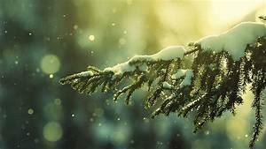 Winter Nights and Christmas Lights