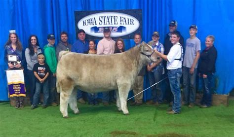 Another Outstanding Gold Rush Steer! Raised By Werning