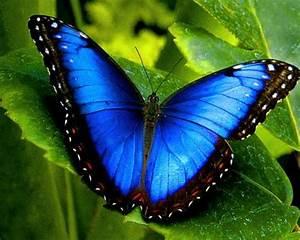 Schmetterling Am Kinderbett : schmetterling bedeutung und symbole deko feiern ~ Lizthompson.info Haus und Dekorationen