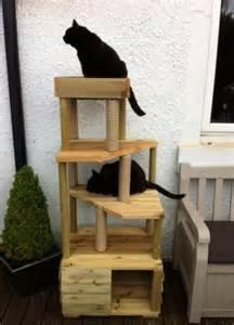 cat climbing tower cat climbing towers