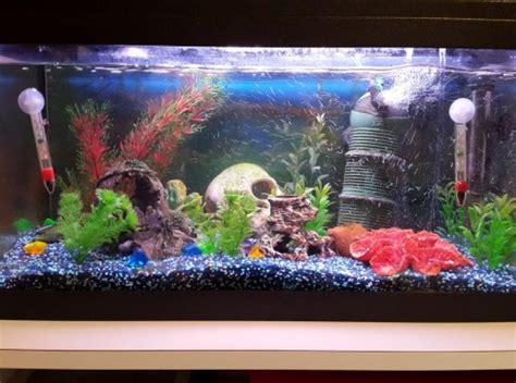 aquarium 54l avec tout le mat 233 riel et poissons animaux