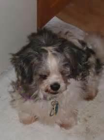 Small Dog Rescue Adoptions