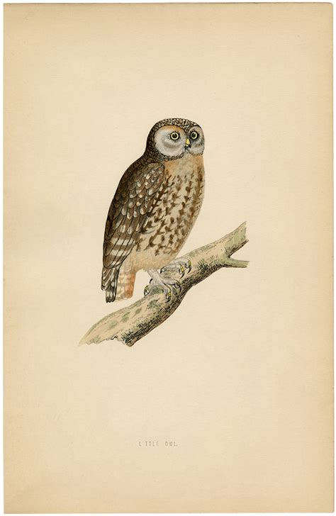 Cute Vintage Owl Printable - The Graphics Fairy
