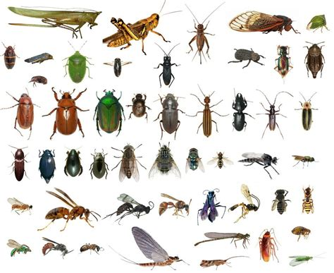 50 Dead Bugs Entomology Class Insect Bug Collection