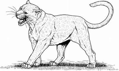 Coloring Leopard Pages Cat Realistic Cats Animal