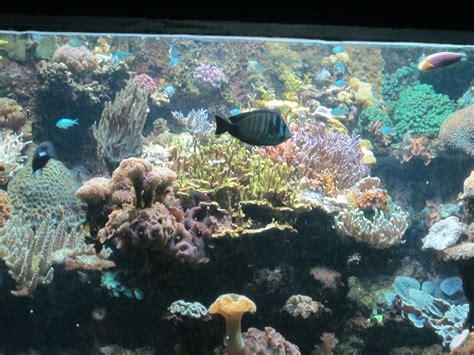 aquarium marin du cap d agde les alsh 224 l aquarium marin du cap d agde 171 agenda 171 le officiel de la ville de poussan