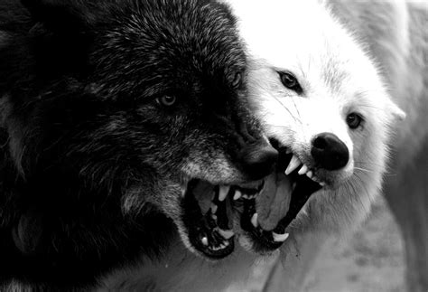 42 Amazing Truths About Wolves Everyone