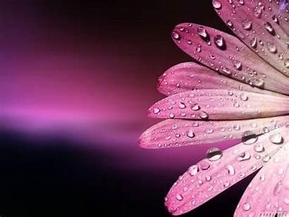 Pink Flower Wallpapers Flowers Desktop Yellow Wallpapersafari