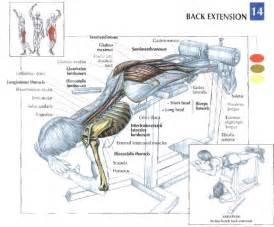 Back Extension - Peak Fat Loss and Fitness
