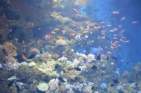 Animated Aquarium Wallpaper Gif - aquarium fish wallpaper gif 1000 aquarium ideas
