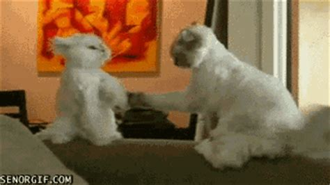 funny compilation  lol cats part     waste