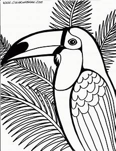 Tropical Bird Coloring Pages - High Quality Coloring Pages ...