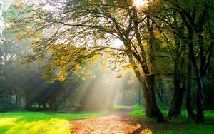 Trees, Path, Sun, Rays, Dirt, Road, Hd, Wallpapers, Desktop, And, Mobile, Images, U0026, Photos