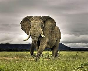 Beautiful Animals Safaris: Elephant Animal Safaris