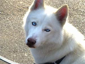 I want a white dog with blue eyes - LUV My dogs