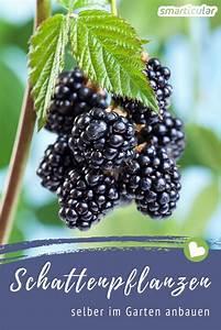 Pflanzen Im Schatten : essbare pflanzen die im schatten wachsen anbautipps f r garten balkon ~ Orissabook.com Haus und Dekorationen