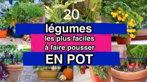 legumes en pot sur balcon les 20 l 233 gumes les plus faciles 224 faire pousser en pot pr 233 sentinfos