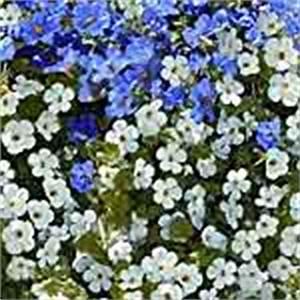 Balkonpflanzen Hängend Pflegeleicht : balkonpflanzen des jahres ~ Lizthompson.info Haus und Dekorationen