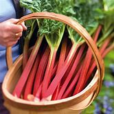 watermelon-recipes