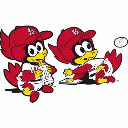 Clipart Cardinals Louis St Fredbird Bird Fred