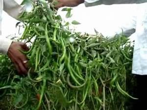Green Planet Bio Product/Yogesh/Mirchi2 - YouTube