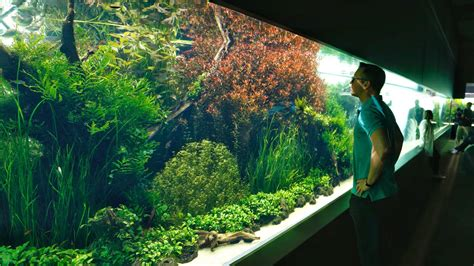 Freshwater Aquascape Ideas by The World S And Best Aquascape Emotional