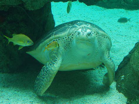 g 234 nes l aquarium de g 234 nes ligurie italie aquarium de g 234 nes g 234 nes aquarium g 234 nes g 234 nes