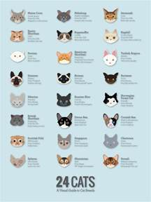 cat species cat breed poster cats types