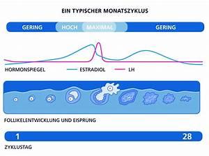 Zyklus Nach Pille Absetzen Berechnen : der weibliche zyklus ~ Themetempest.com Abrechnung