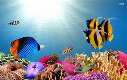 Fish Tropical Desktop Wallpapers Fishes Saltwater Backgrounds