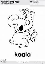 Koala Coloring Pages Cute Baby Bear Simple Super Koalas Worksheets Animal Printable Animals Printables Kindergarten Colouring Bears Sheets Learning Christmas sketch template