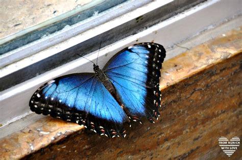Botanischer Garten München Kontakt by Tropische Schmetterlinge Im Botanischen Garten Muenchen