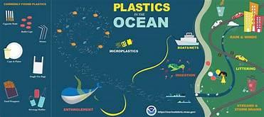 Microplastics found in every marine mammal surveyed.
