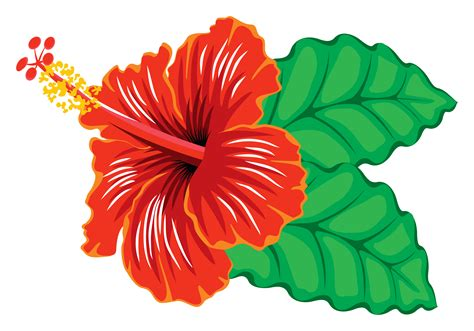 privacy fence clipart hibiscus