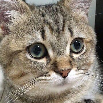おもしろ猫画像 (@_yametekure_)   Twitter